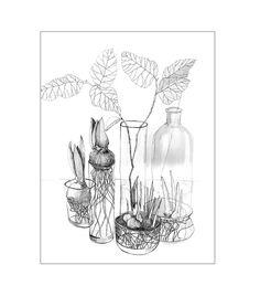 dodatki - plakaty, ilustracje, obrazy - grafika-PLANTS, print   30x40cm