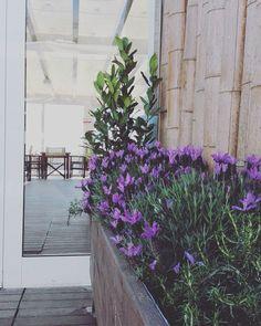 Flowers & Detalis ~ Bagno Delfino ~ Marina Romea ⚓️#bagnodelfino42 #ravenna #flowers #marinaromea
