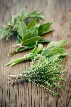 13 hierbas que curan