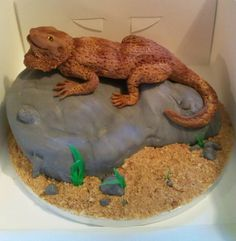 Bearded dragon cake from Cakes By Nicky