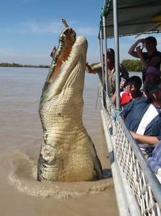 How big was the biggest crocodile in the world ever caught? What were the top 10 largest crocodiles ever caught in the world? The biggest crocodile was. Giant Animals, Animals And Pets, Funny Animals, Cute Animals, Large Animals, Scary Animals, Crocodile Marin, Crocodile Dundee, Nile Crocodile