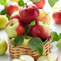 In the apple orchard. Fruit And Veg, Fruits And Vegetables, Fresh Fruit, Fresh Apples, Food Fresh, Growing Vegetables, Apple Harvest, Harvest Time, Apple Tree