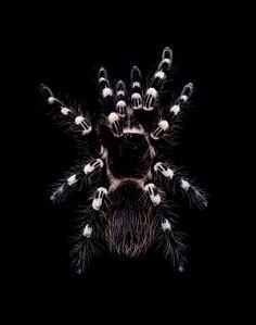 Some sort of tarantula? Not good for an arachnaphobe.