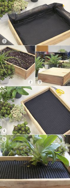 kleiner garten aus sukkulenten f r das wohnzimmer diy garten pinterest garten garten. Black Bedroom Furniture Sets. Home Design Ideas