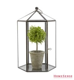 Cute terrariums at Homesense! Homesense, Color Me Beautiful, What's Your Style, Spring Blooms, Bath, Topiary, Rustic Chic, Victorian Fashion, Decoration