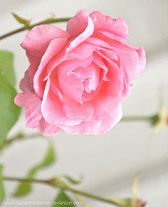 wonderlandhood:  flower   Tumblr on We Heart It.