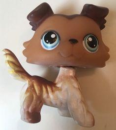Littlest Pet Shop Collie Dog 58 Variant 4 Paws Down Sage Blue Eyes | eBay