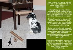 Hang paper towel tubes in random areas and put treats inside to let rabbits know it's for them.
