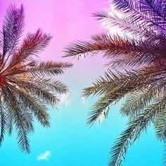 Palm Tree Vibes   Pura Vida Bracelets