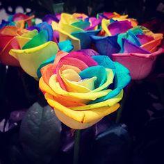 Australia Burns (The Wild Rose Press Charity Anthology) Vol. Rainbow Roses, Rainbow Colors, Beautiful Rose Flowers, Beautiful Things, Fotografia Macro, Rainbow Aesthetic, Colorful Roses, Rose Wallpaper, Charity