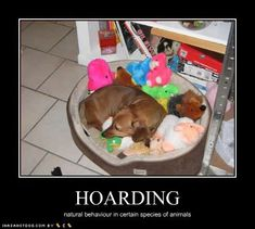 .There's a good chance I know a dachshund like this...