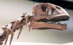 Isanosaurus. Real Dinosaur, Dinosaur Skeleton, Creatures 3, Dinosaur Fossils, Life Form, Vertebrates, Extinct, Reptiles, Stencil