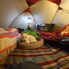 In the Tent