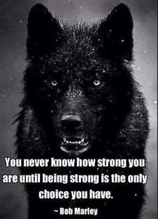 Wolf Quote Ideas wolf quote being strong lone wolf weisheiten Wolf Quote. Here is Wolf Quote Ideas for you. Wolf Quote lone wolf love this great quote im wolfy all the way. The Words, Positive Quotes, Motivational Quotes, Inspirational Quotes, Quotes Quotes, Honor Quotes, Motivational Speakers, Funny Quotes, People Quotes
