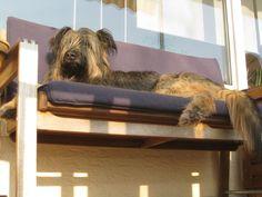 Lazy Lotta auf der ihrer Lieblingsbank. #hund #buch #dog #book #Sonne #Entspannung #Balkon #Bank #relaxen #entspannt #sonnen #Sommer #Terrasse #Kissen #Idylle #Ruhe #Stimmung