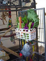 Dishwasher basket for foraging is a great idea for both toys and fresh fruits & veggies. And it's dishwasher safe! #AvianEnrichment #Parrots #Pets #Birds