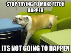 funny dog pics with captions | Funny Pictures Of Animals | Fun Claw: Funny Pictures Of Dogs - 20 Pics