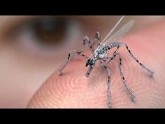 ›US military tests bug size + › US-Militär testet Bug-Size-Drohnen U. Micro Drone, Spy Gadgets, Cool Gadgets, Spy Drone, Apple Tv, Robot Animal, Small Drones, Dengue Fever, Arte Robot