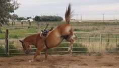 Learn the first steps to getting your horse accustomed to its new home in our fr… Learn the first steps to getting your horse accustomed to its new home in our free horse riding article. - Art Of Equitation Centered Riding, Horse Behavior, Horse Information, Free Horses, Horse Training Tips, Natural Horsemanship, Horse Property, Horse Stables, Best Investments