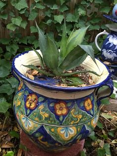 Agave in Talavera pot from Kay. 22/15