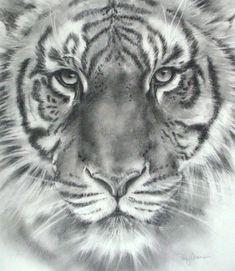 | Tiger Head Drawings in Pencil