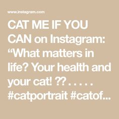 """CAT ME IF YOU CAN on Instagram: """"What matters in life? Your health and your cat! 🐈💛 . . . . . #catportrait #catofday #catcatwalk #catoftheworld #catpicoftheday…"""" Cat Walk, Canning, Cats, Health, Life, Instagram, Walkway, Gatos, Health Care"""
