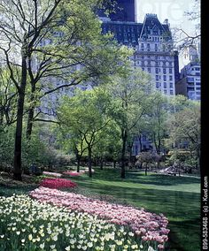 Spring tulips in Central park April 2011 May 2012 With Laura and Dean :)