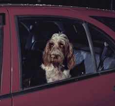 LINK: Mute: The Silence of Dogs in Cars by Martin Usborne
