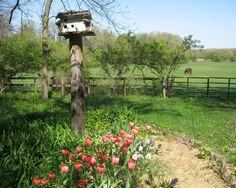 COUNTRY GARDEN  photograph of a country by conniesonnenberg, $40.00