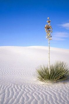 White Sands National Monument is the world's largest gypsum dunefield and it's in Alamogordo, New Mexico.