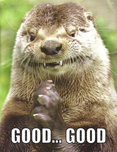I always used to think otters were cute until know