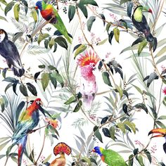 Graham & Brown Wallpaper   Amazon Tropical Multi   106624 – WonderWall by Nobletts
