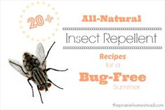 20 All-Natural Insect Repellent Recipes for a Bug-Free Summer