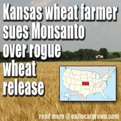 how to avoid gmo foods in usa at http://www.gmofreegazette.com