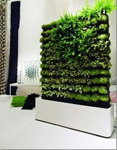 Green walls for interior spaces - this is the most awesome and innovative idea I have seen in a long time...I love it!!!