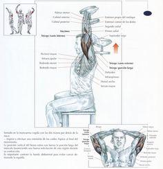 Ejercicios para tríceps: Los 5 mejores ejercicios para tríceps con mancuernas