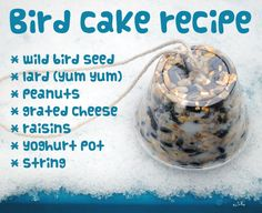 Bird Cake Recipes. Look after our feathered friends this Winter!