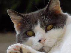Kitty Katze | Pawshake Neubiberg