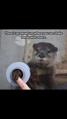 Ahhhh, I love otters!
