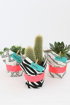 DIY Fabric Wrapped Succulents | alice & lois for minted