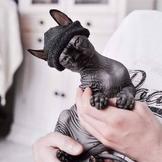 Sphynx cat is a special breed of cats that constantly need warmth. I present to you 15 warm clothes for Sphynx cats. I Love Cats, Crazy Cats, Cool Cats, Baby Animals, Funny Animals, Cute Animals, Baby Giraffes, Wild Animals, Sphynx Gato