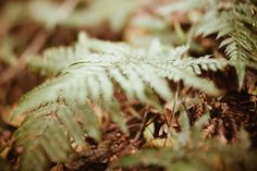 Photo by Tessa Cheetham #leaves #plants #forest #nature #outdoors #green #bushes #trees #mountglorious #australia #photography #naturephotography #free-lens #free-lensphotography #freelensphotography #fern