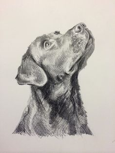 Lucy Wilson — Day - Graphite on card by Lucy Wilson, New.by Lucy Wilson — Day - Graphite on card by Lucy Wilson, New. Dog Pencil Drawing, Pencil Art Drawings, Cute Drawings, Animal Sketches, Animal Drawings, Art Sketches, Dog Drawings, Epic Art, Dog Illustration