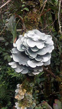 Mycological Inspiration - Album on Imgur