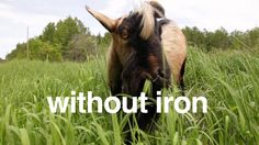 #imagineLiFewithoutiron...or lawnmowers.  #minnesotairon.