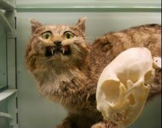 awesomely bad taxidermy