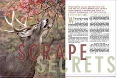 Deer Scrape Secrets