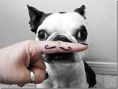 Un moustachu !!!!!!!!