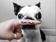 I mustache, why are you doing this?