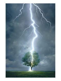 lightening striking tree.....http://www.pinterest.com/tinaehler/tornados-and-other-storms/